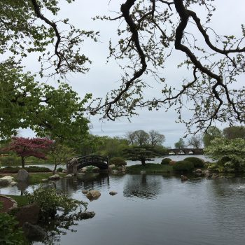 Summer 2019: Urban Odyssey, Communing in Chicago's Japanese Garden